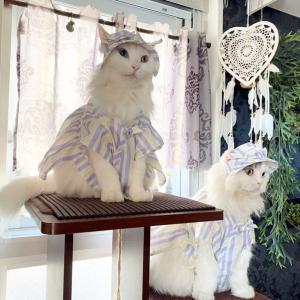 2/22 猫の日です ฅ^. ̫ .^ฅ / 映画『キャッツ』