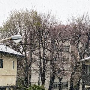 3月の雪第3弾!