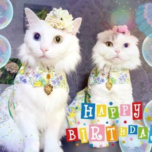 キーちゃんのお誕生日おめでとう