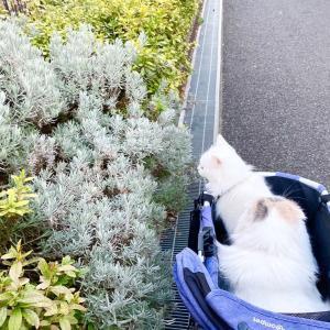 あったかい日 (ヘンテコな木) /ラムネちゃん本気寝動画(猫の眠りの種類について)