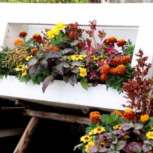 「休暇村近江八幡」東館の秋の花装飾
