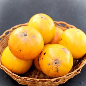 富有柿と百目柿