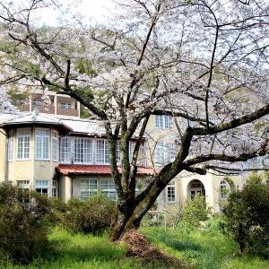 春の水郷周辺(近江八幡市)