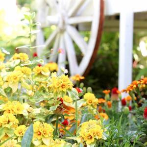 ガーデンは、夏色に
