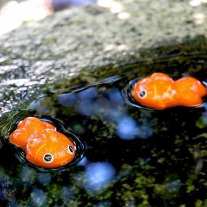 手水鉢に金魚