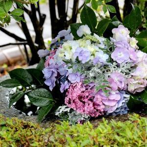 『RAIN』(手水鉢のアジサイ)