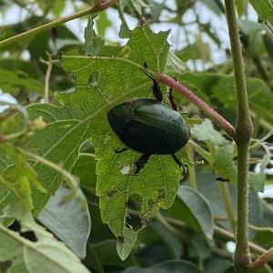ガーデンの病害虫管理は、『IPM』