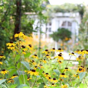 ガーデンも夏色。暑い夏
