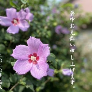 季節の花は強い