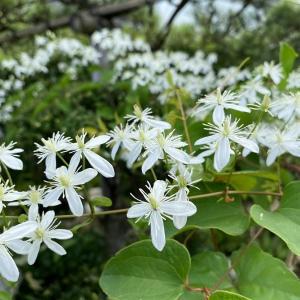 「綺麗な花には毒がある」?