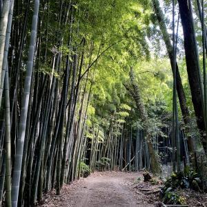涼しい竹林風景