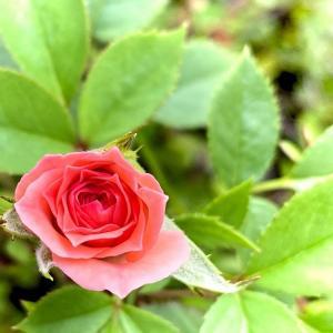 ポツリポツリ咲いている花
