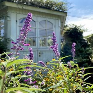 ガーデンは、紫に