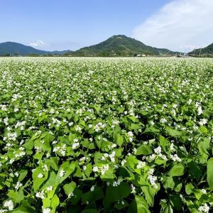 白く染まる田園(近江八幡市)