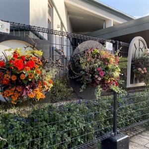 秋の花「みずの森」(草津市)