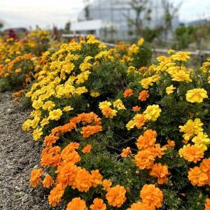花壇管理と自治会改革