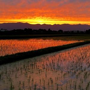 すごい「草」と「夕日」