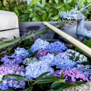 紫陽花で花手水