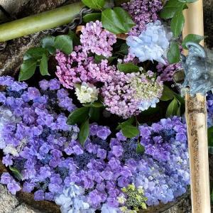 「花手水」を紫陽花で新たに