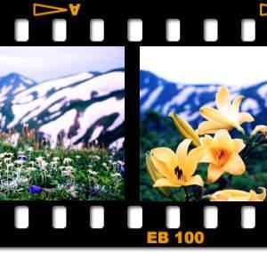 「梅雨明け十日」は、天空のお花畑