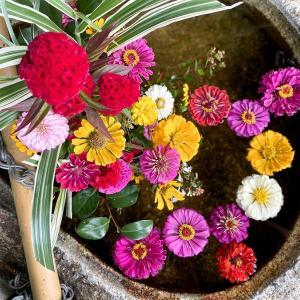 百日草の花手水