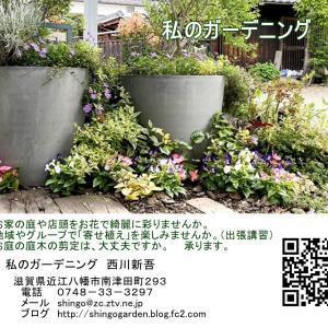 庭仕事、ガーデン装飾承ります。