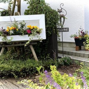 T邸ガーデンの植え替え