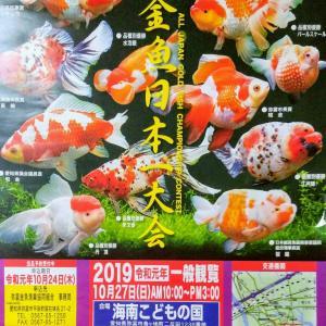 金魚日本一大会のポスターをいただきました♪