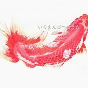 絵になる金魚さんの「和金」さん