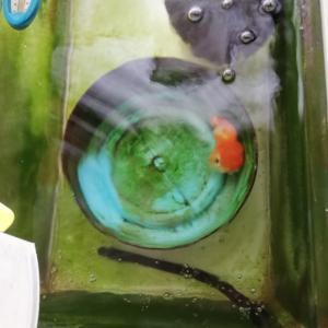 苔水槽のメンテナンス