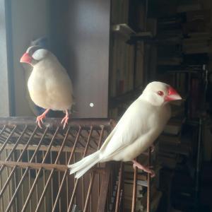 鳥と生活 / 保定と爪切り