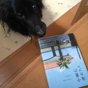 千葉の海カフェと桜🌸