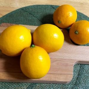 マイヤーレモンの保存食