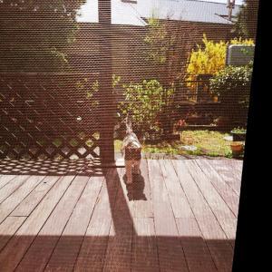 不思議猫、さしみ