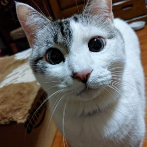 ひたすらちゅ〜るを食べる猫