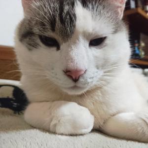 猫写真いろいろと感謝の気持ち
