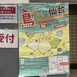 鳥フェス仙台2020とひなちゃん