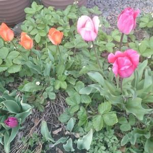 我が家の小さな庭に植えたもの★★野菜・プランターで育てる果実の木★★