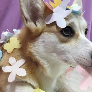 花咲むぎさん