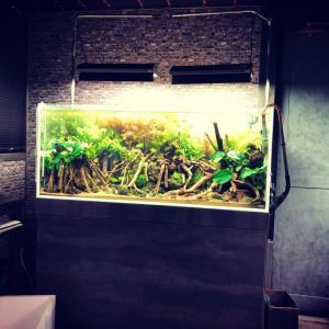 120センチ水槽レイアウトメイキング〜有茎草の美編