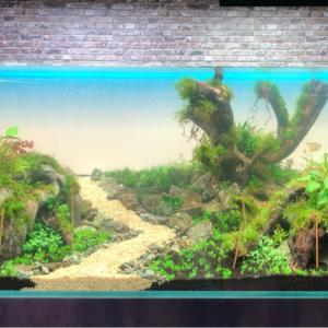 120センチ水槽レイアウトメイキング〜後景植栽から注水
