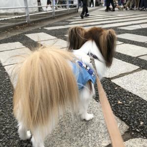 駒沢わんこ祭りに行ってきました。(感想)