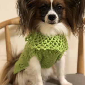 犬の手編みセーター完成しました。1