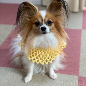 犬の手編みセーター完成しました。2