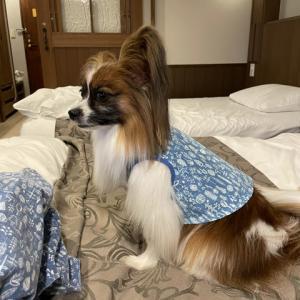 愛犬あさと軽井沢旅行 ⑦ ルシアン旧軽井沢に宿泊。