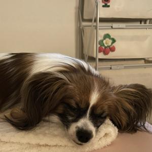 愛犬と一緒に寝る幸せ。
