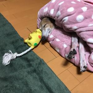 おやすみなさぁい