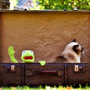 明日タイに出発します。荷造り完了、あとは行くだけ