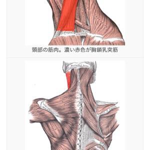 顎関節と肩甲骨周りと胸鎖乳突筋