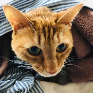 ネコが教えてくれる秋とインドへの想い